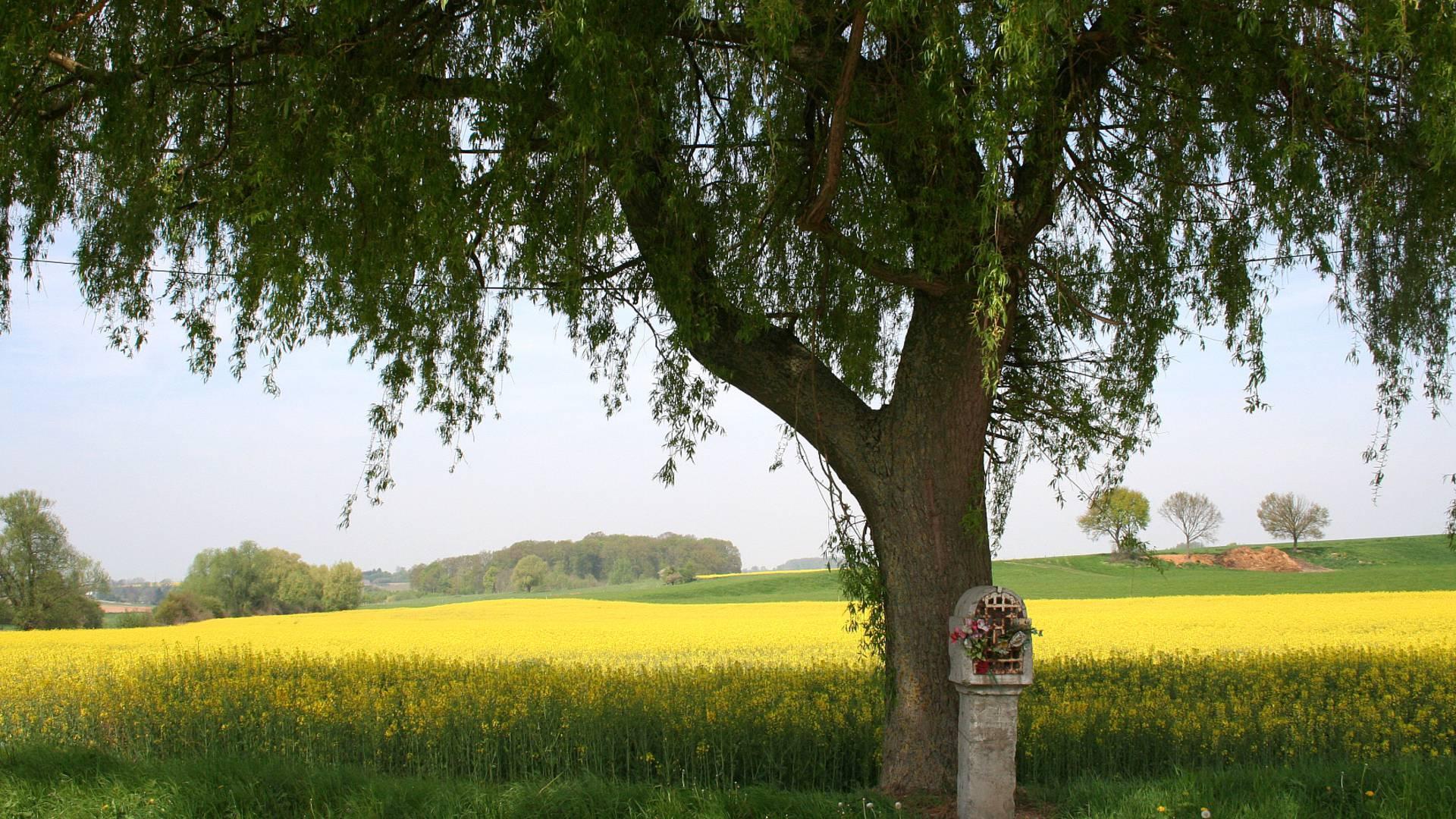 Paysage à Warnant-Dreye - copyright Jean-Pol Grandmont