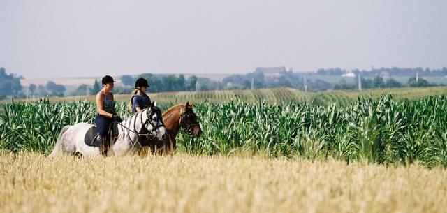 Zu Pferde